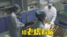《奇妙的朋友》3月14日看点:黄轩倪妮惊险体验给老虎看病