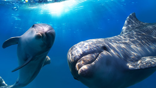 游客潜水遭遇大白鲨 惊喜变惊吓
