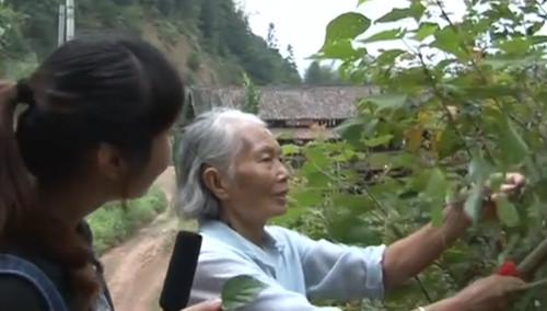 怀化芷江·树叶做豆腐 不一样的滋味